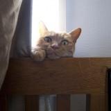 猫 ヘンな顔